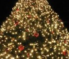 tree_lighting_194x259